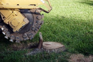 trim-masters-tree-service-tree-stump-removal